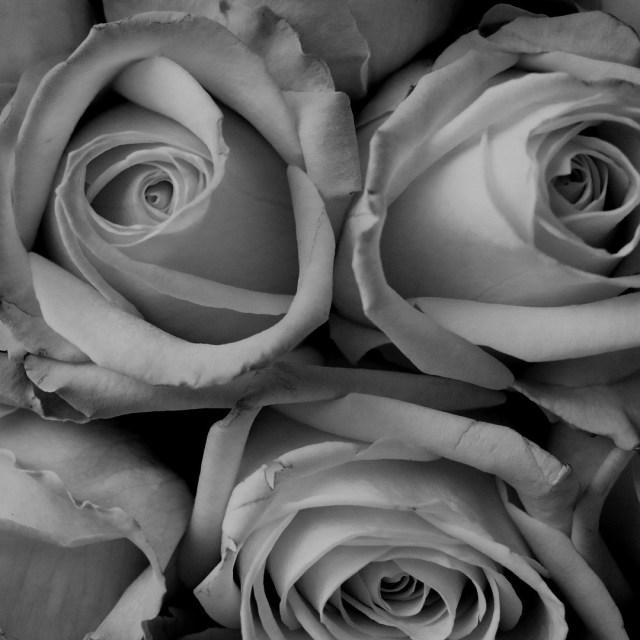 Roses Black White