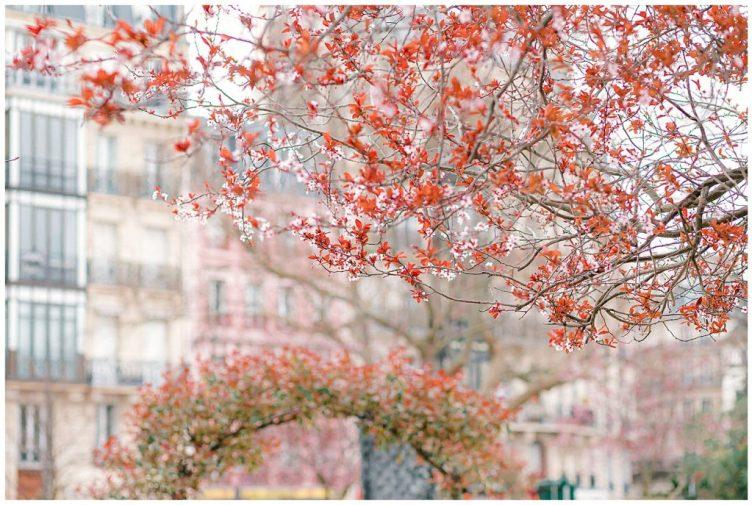 tree in Paris