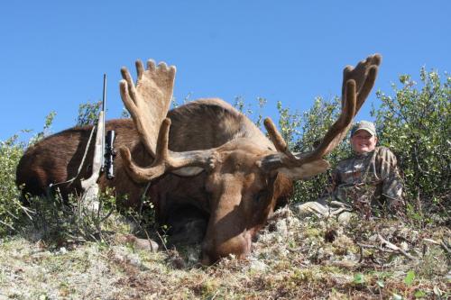Moose hunting shoot straight tv