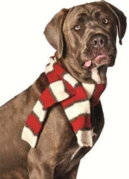 Puppy Scarf - gifts for dogs