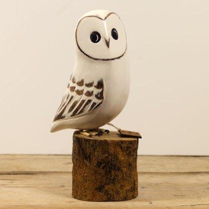 Baby Barn Owl