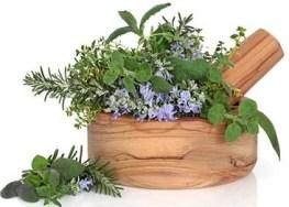 Hemp Oil Health Benefits _Herbal-Remedies