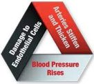 Blood Pressure Problems_vicious-cycle
