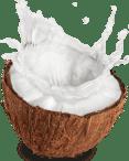 Smoothie ingredients-Coconut_Water-green-juice-Organifi