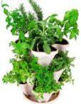 Seeds _assorted-stackers_WheatgrassKits