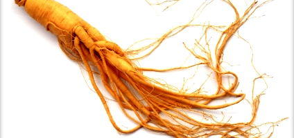 Where to buy Ginseng online