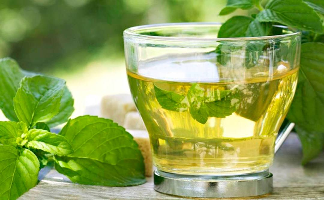 Best Green Tea in India from Various Brands