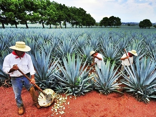 Mazatlan All About Tequila Excursion at La Noria - Mazatlan Excursions