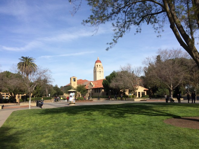 A view of Stanford's Greene library and Hoover Tower