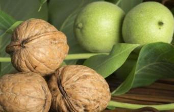 Home - walnut husk