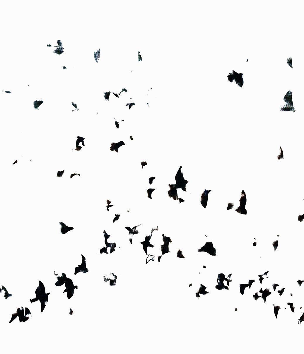 'Flock', 2008