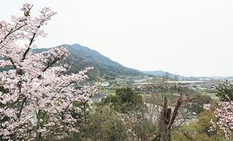 五郷山公園の桜