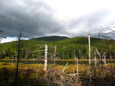 Kearsarge North and Shingle Pond, from Weeks Brook Trail, White Mountains