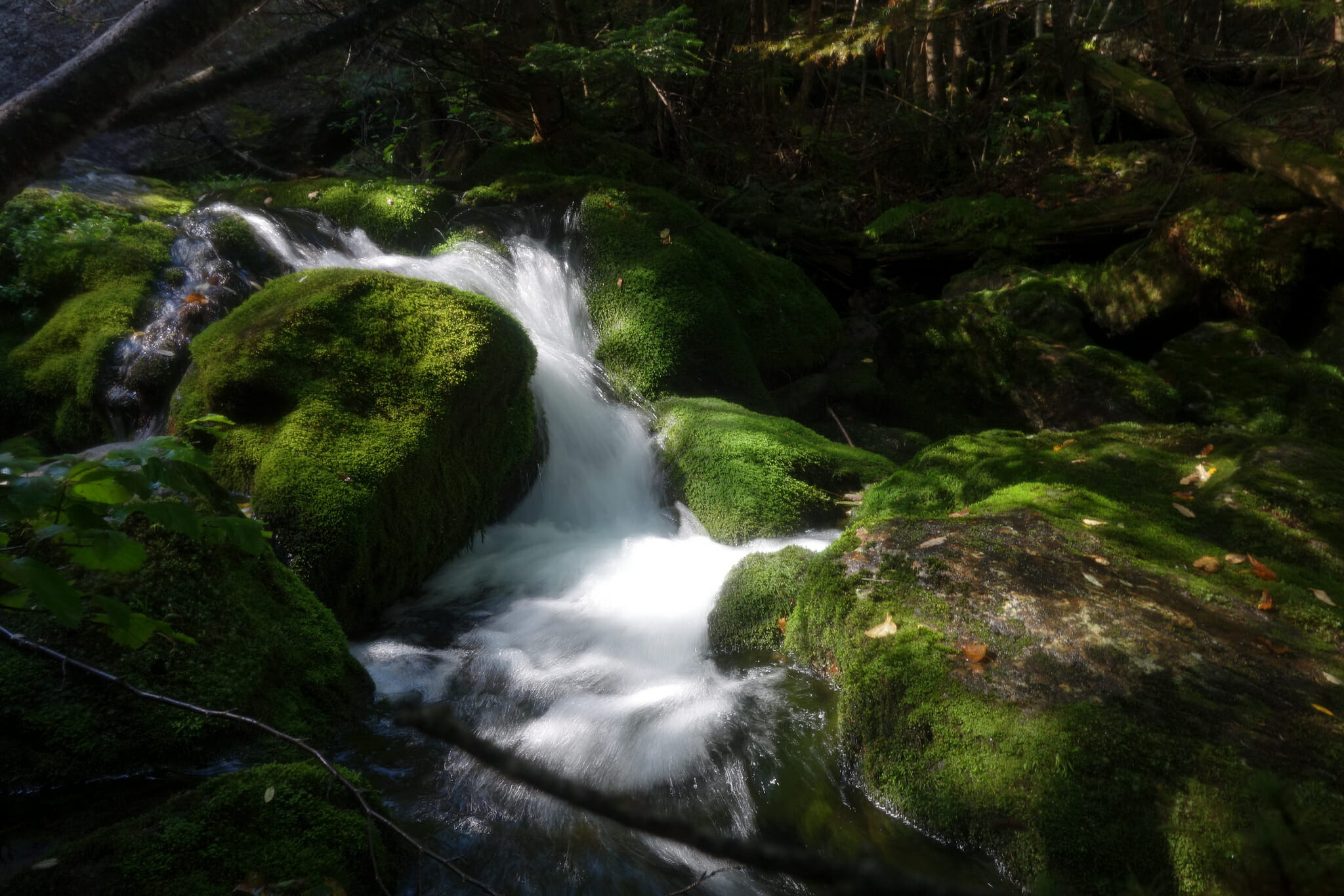 Stream on the King Ravine trail, White Mountain National Forest