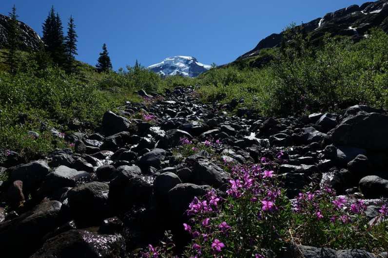 Heliotrope Creek and Mount Baker