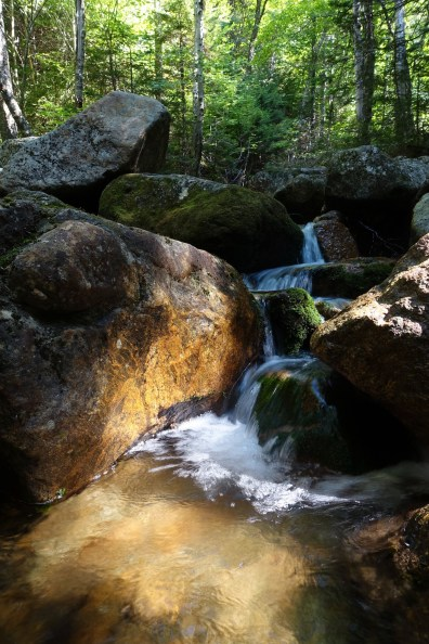 Stream flowing over boulders in a forest