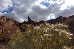 Dried flowers and Upheaval Dome