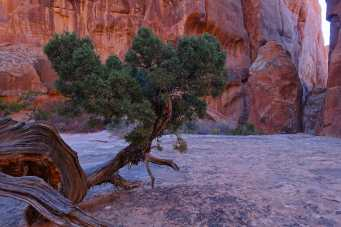 tree in an alcove in the Fiery Furnace, Arches National Park