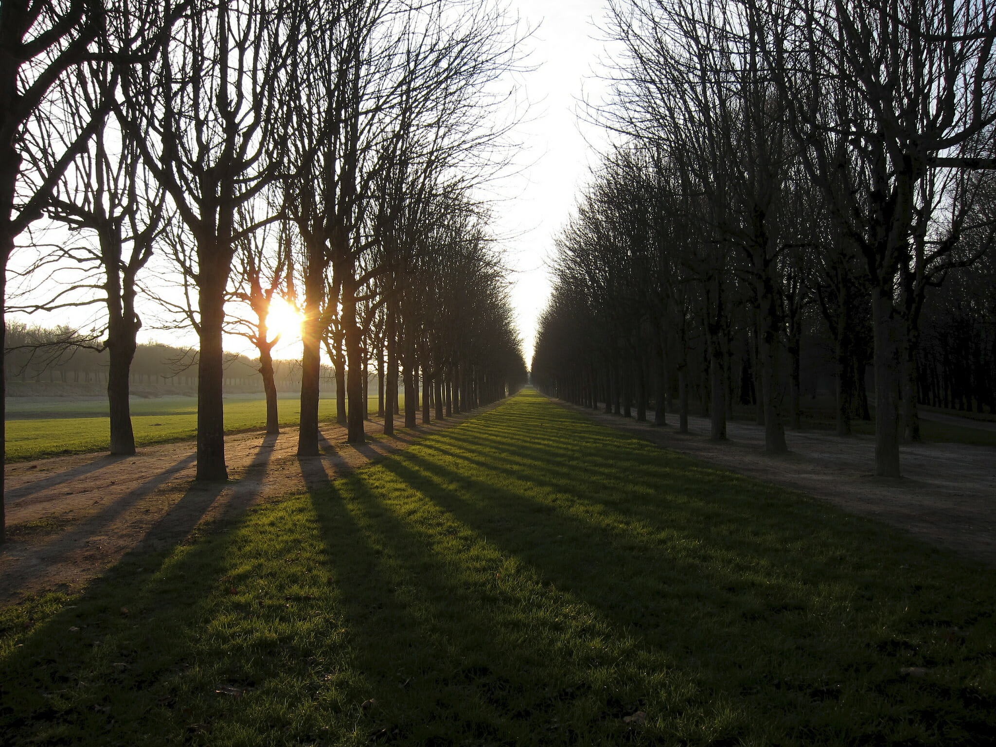 sunset among the trees on the grounds of Fontainebleau