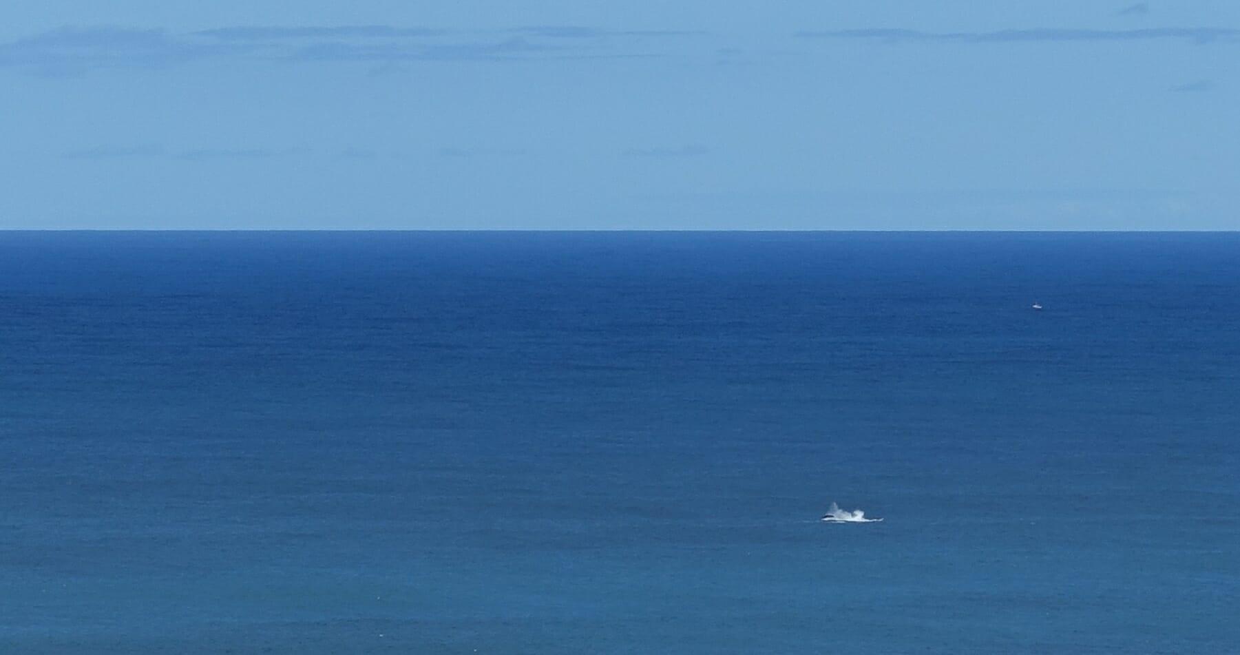 Whales splashing, Kalalau Trail