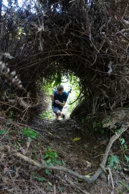 Kyle passes through a tunnel in the brush, Okolehao Trail