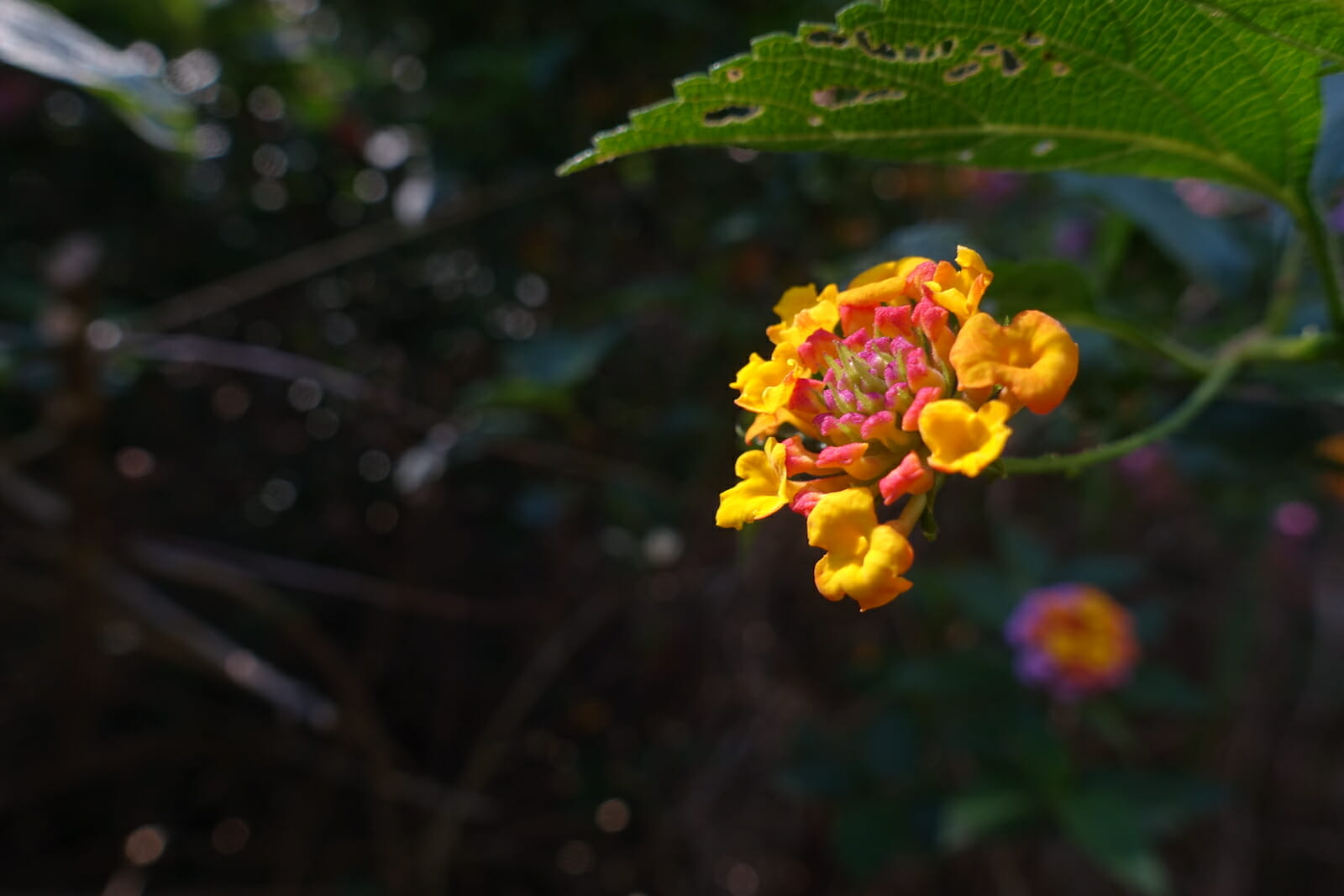Flowers on the Canyon Trail