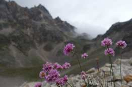 Pink flowers with mountains and clouds in the background