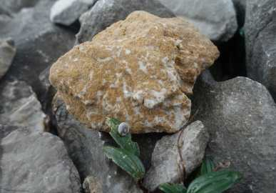 Rock and snail
