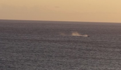 whales from Papawai Point