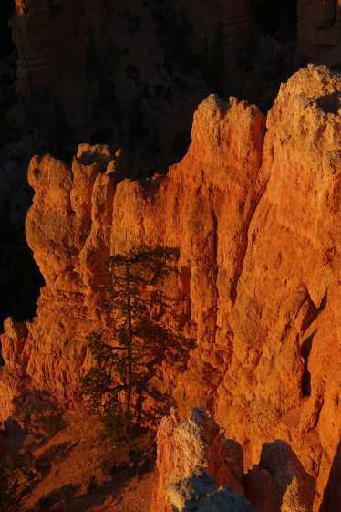Tree silhouetted against the orange glow of hoodoos at dawn in Fairyland Loop