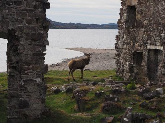 Deer in ruins