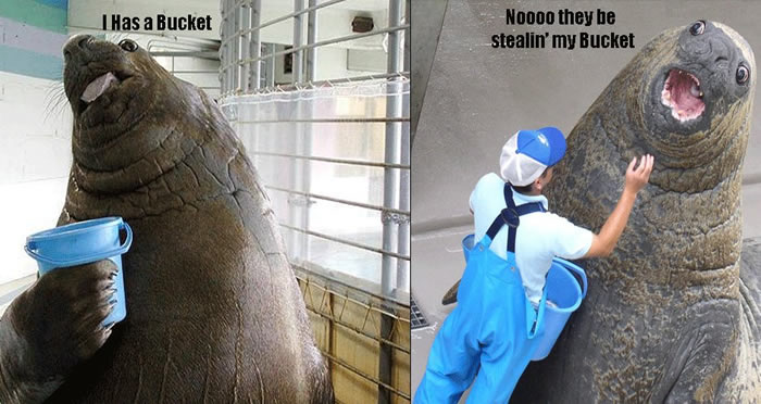An elephant seal is robbed