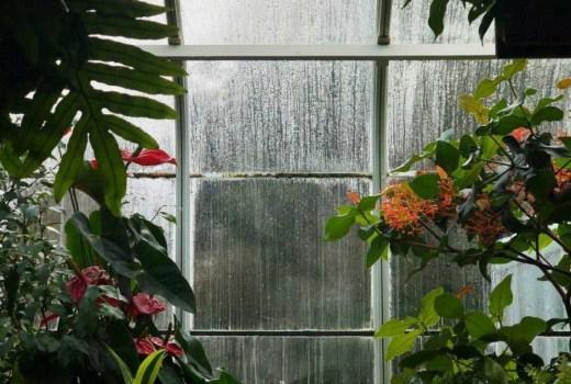 medical-plant-balcony
