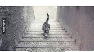 O Vestido Parte 2: O gato sobe ou desce? 7