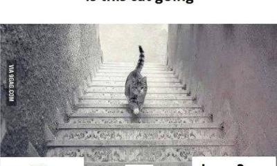 dilema do gato - O Vestido Parte 2: O gato sobe ou desce?