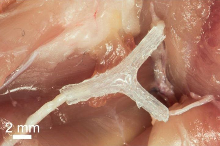 3D-printed-nerve-guide-for-nerve-generation