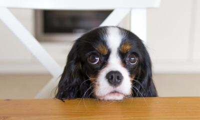 Como o seu cãozinho adestra você