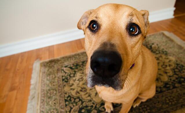 erros que donos cometem  face - Como o seu cãozinho adestra você