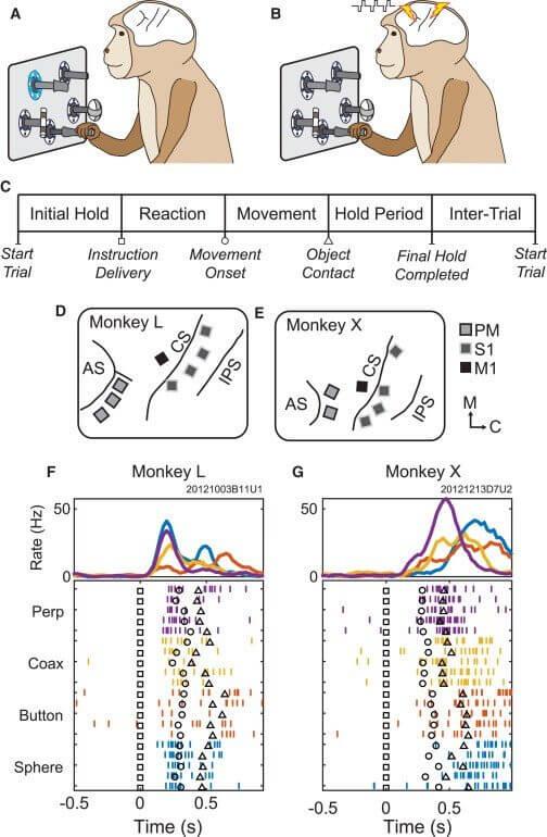 """Cientistas injetam e reorganizam """"informações"""" em cérebros de macacos 8"""