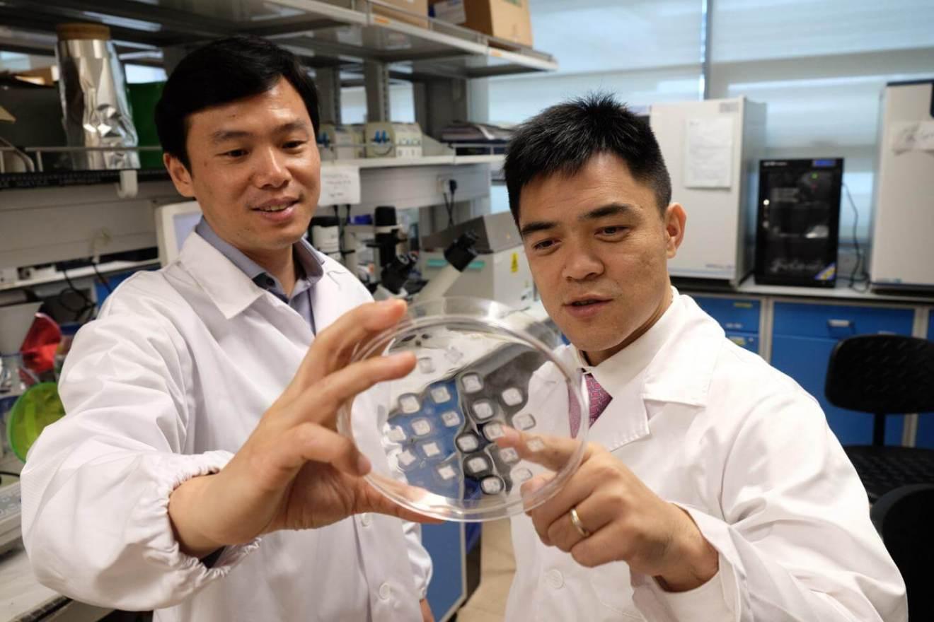 159401 web - Incrível: novo adesivo é capaz de emagrecer e combater a obesidade