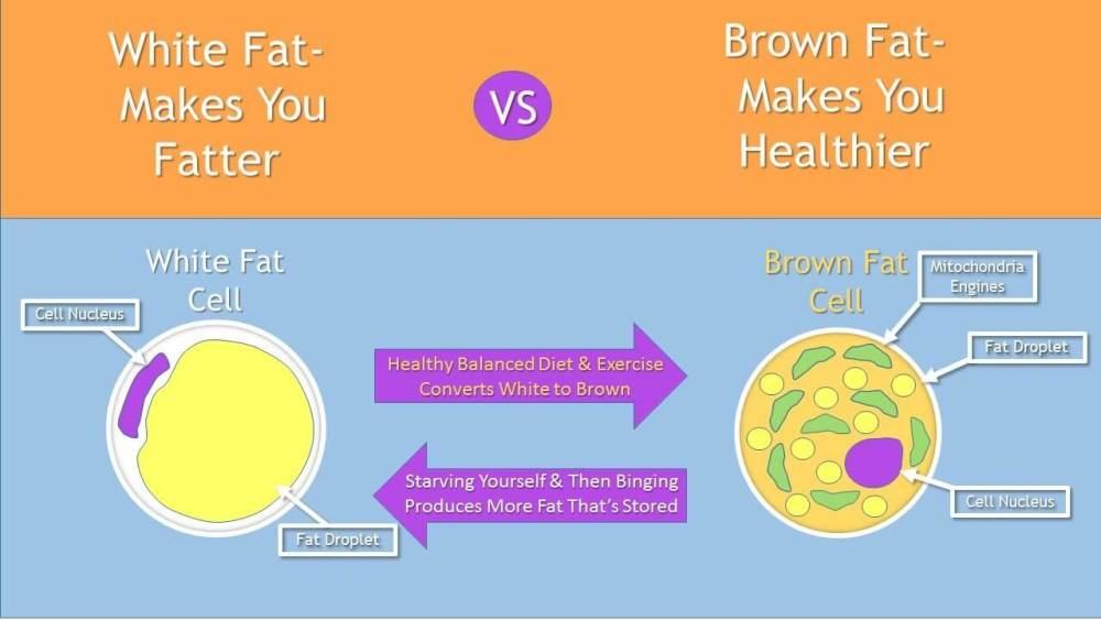 brown vs white - Incrível: novo adesivo é capaz de emagrecer e combater a obesidade