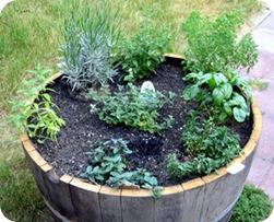 barrel_herbs