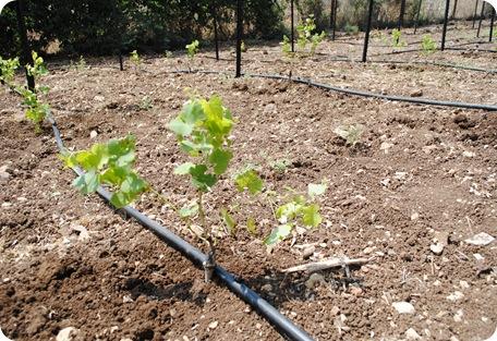cs planting 107