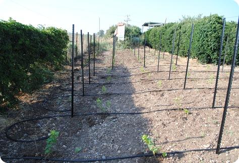 cs planting 111