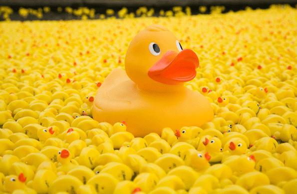 SHrewsbury River Festival Duck Race