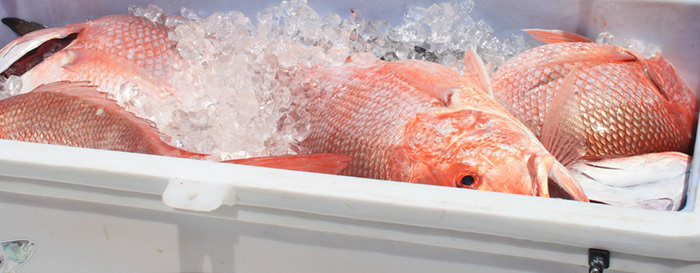 SSA Negotiated a long-term solution to reduce shrimp trawl effort and bycatch mortality in specific juvenile red snapper habitat areas of the Gulf