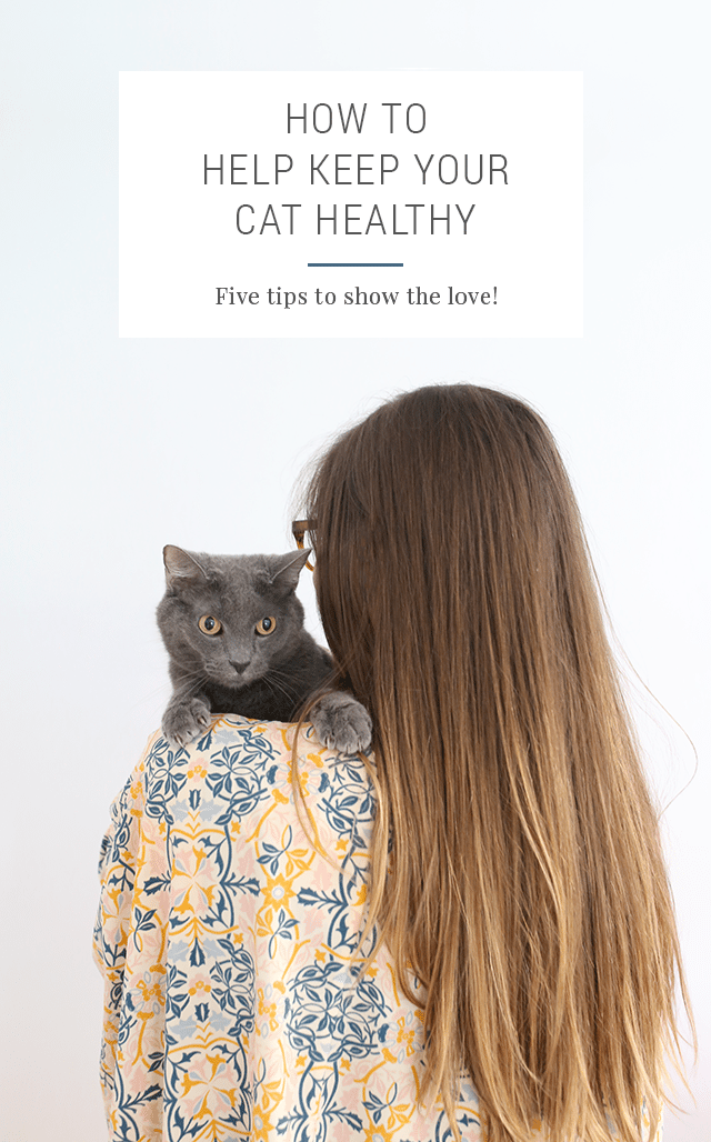 How to Keep Your Cat Healthy