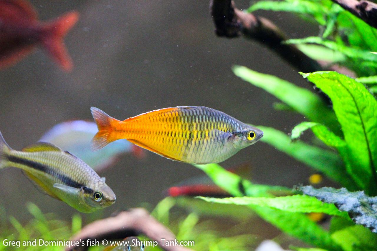 Fish Tank Plants Sale