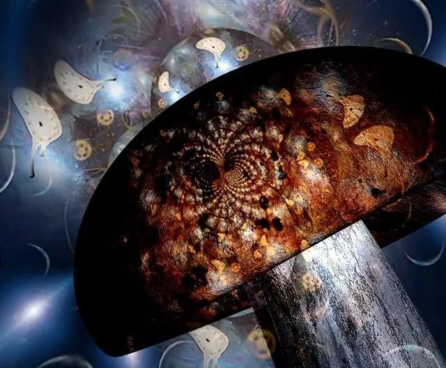 https://i1.wp.com/www.shroomsdeliverycanada.com/wp-content/uploads/2020/05/bigstock-Hallucinogenic-mushroom-and-me-368192620-e1590624571762.jpg?resize=640%2C528&ssl=1