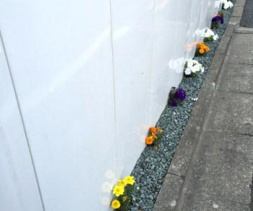 工事現場 の仮囲いに春の遊び心。とても癒やされます